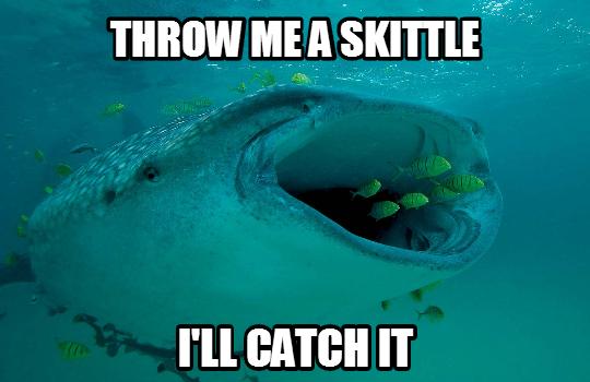 shark_catch_skittles