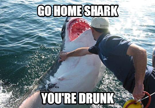 shark_go_home_drunk