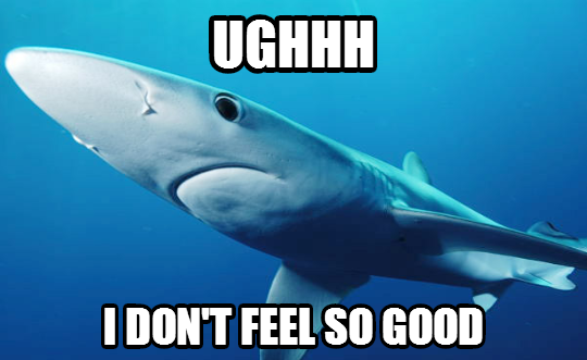 shark_queasy